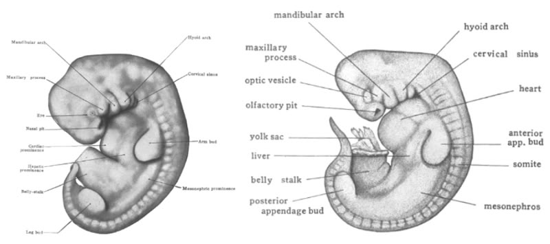 fish embryo labeled